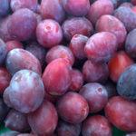 Ramassin (plum)