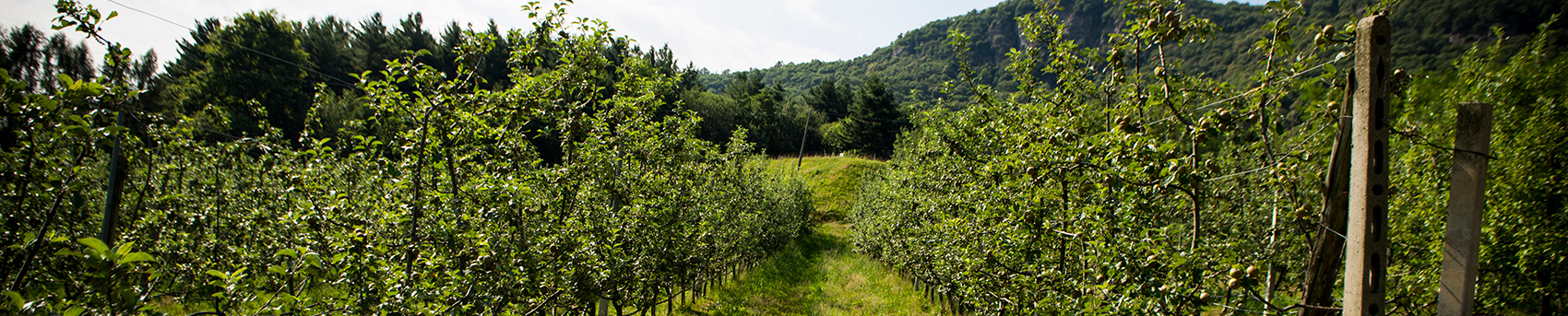 azienza-agricola-bargiolina-2